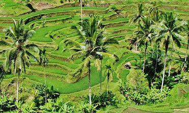 indonesia002