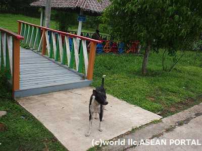 myanmar-dog